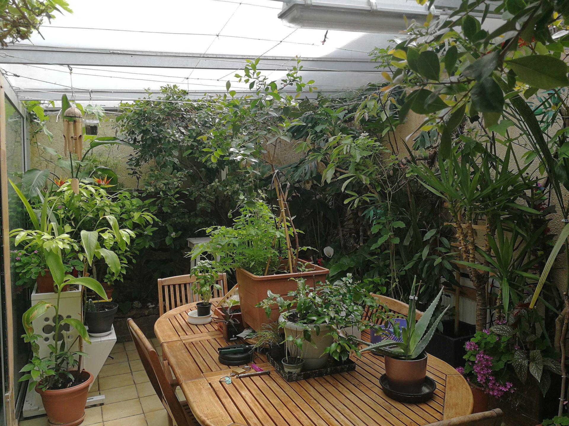 Horticulteur Val D Oise jardin tropical : un petit coin de réunion dans le val d